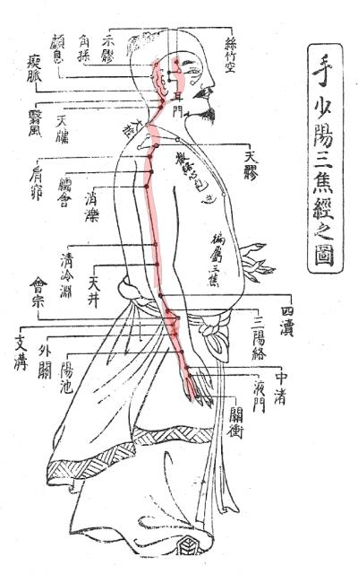 三焦経経筋