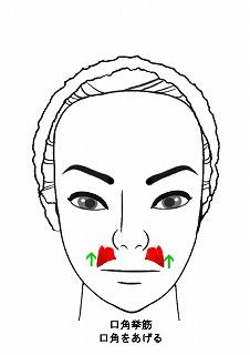 口角挙筋-1