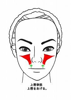 上唇挙筋-2